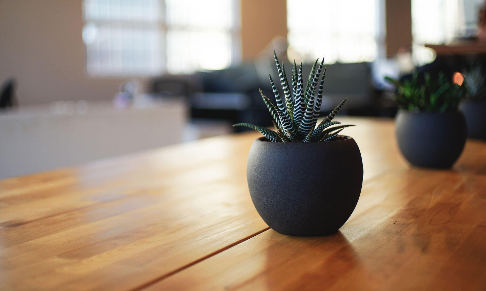 Plant en Houtgoed